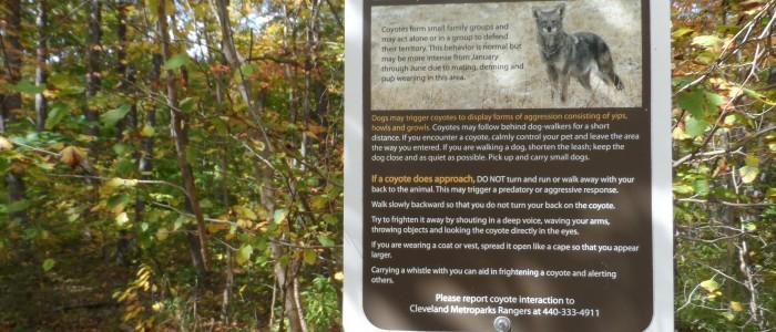 Coyote Habitat Area- Brecksville Ohio, Cleveland Metroparks Oct 2012